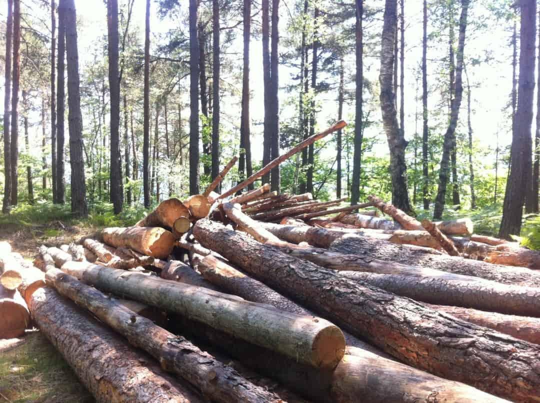wie waldgrundstück kaufen? bäume als grüne kapitalanlage, jetzt zu
